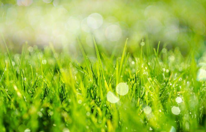 Spring lawncare tips