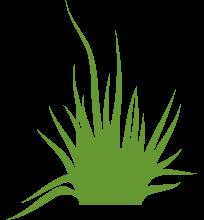 crabgrass prevention