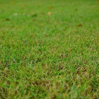 lawn treatment service round 8