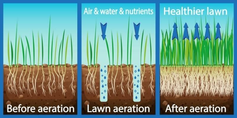 lawn aeration graphic